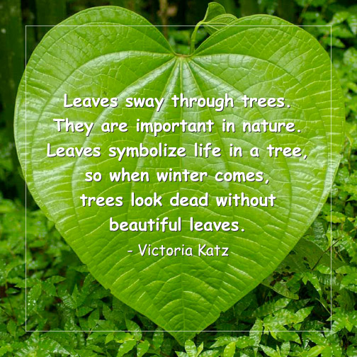 victoria_leaves